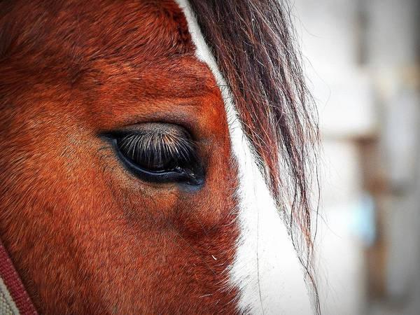 Ns Photograph - Eye Of A Clyde by Karen Cook