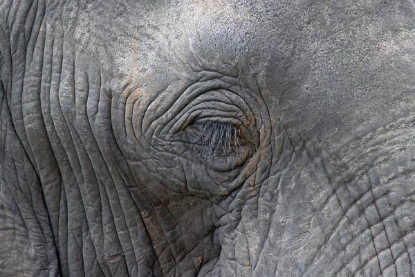 Photograph - Eye Of An Elephant by Tony Murtagh