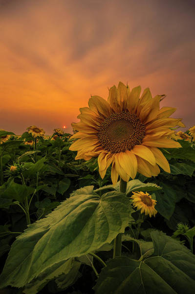 Wall Art - Photograph - Eye Of The Beholder  by Aaron J Groen