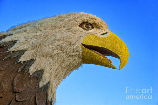 Tournament Of Roses Photograph - Eye Of The Eagle by David Zanzinger