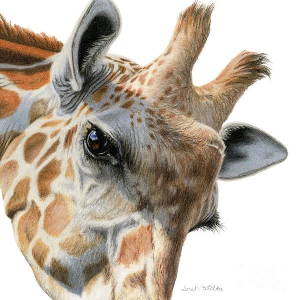 Close Up Drawing - Eye Of The Giraffe by Sarah Batalka