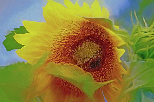 Mixed Media - Eye Of The Sunflower by Lynda Lehmann