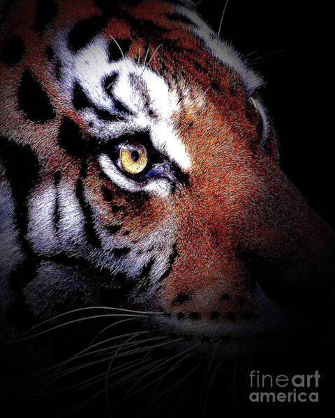 Photograph - Eye Of The Tiger In Portrait by Wingsdomain Art and Photography