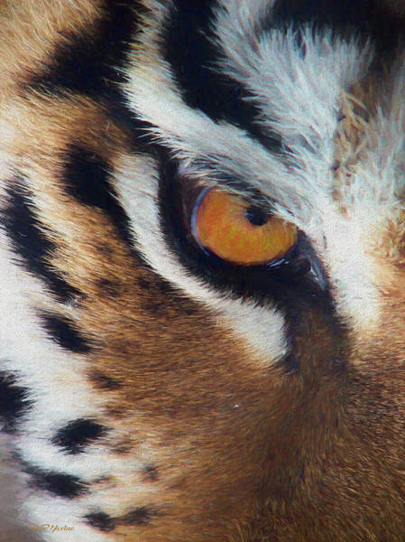 Painting - Eye Of The Tiger - Painted by Ericamaxine Price
