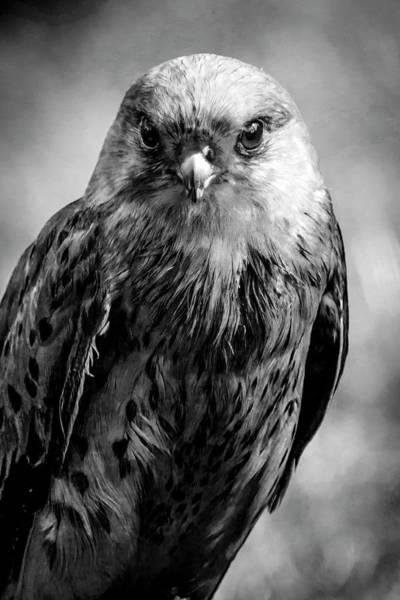 Photograph - Eye To Eye by Cliff Norton