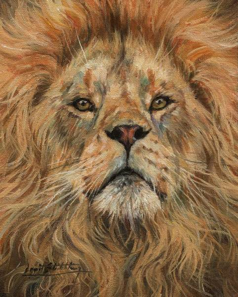 Painting - Eye To Eye, Lion. by David Stribbling