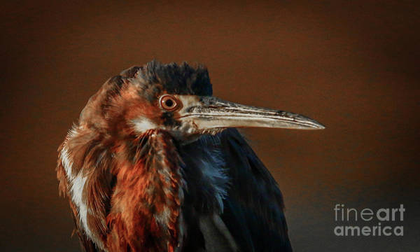 Art Print featuring the photograph Eye To Eye With Heron by Tom Claud