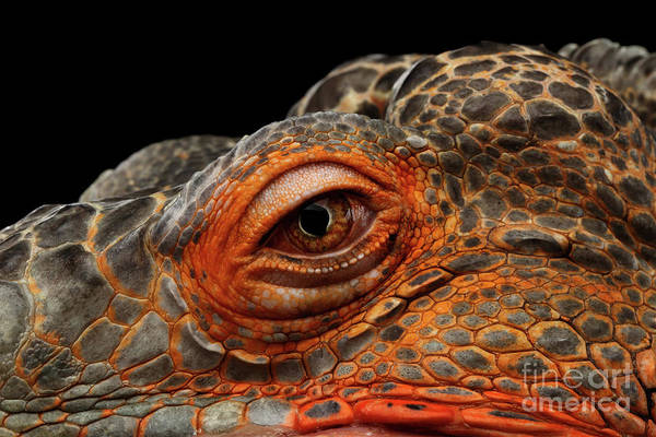 Photograph - Eyeball Of Dragon Head by Sergey Taran