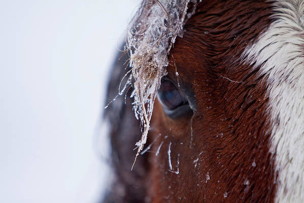 Painted Horses Photograph - Eyeing The Storm by Nicole Robinson