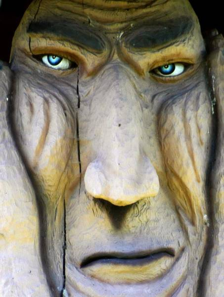 Wall Art - Photograph - Eyes Of A Troll by Lori Seaman