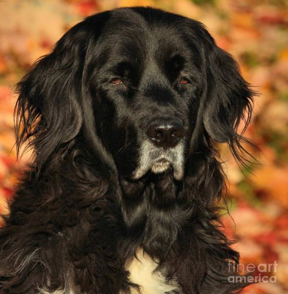 Photograph - Eyes Of Autumn by Debbie Stahre