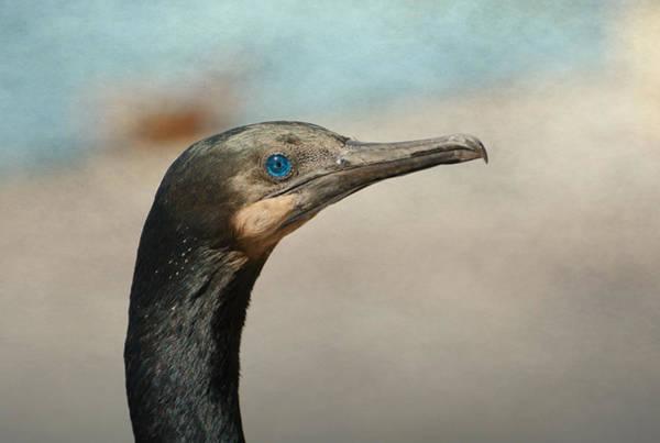 Photograph - Eyes Of Blue 2 by Fraida Gutovich