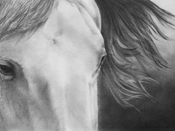 Appaloosa Drawing - Eyes Of Epona by Christopher Brooks