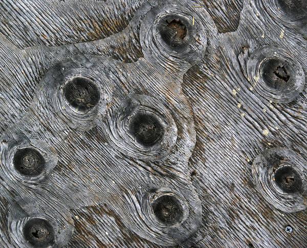 Photograph - Eyes Of Wood by Lynda Lehmann