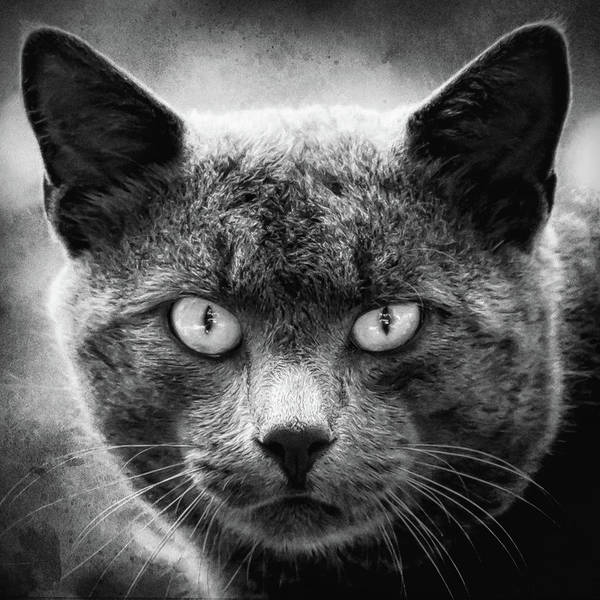 Photograph - Eyes On You Cat Black And White Square by Terry DeLuco