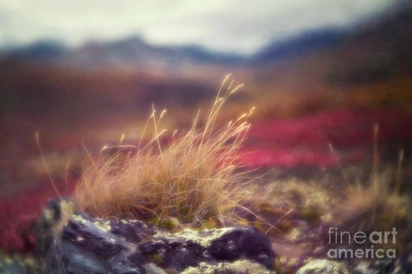 Wall Art - Photograph - Autumn Grass by Priska Wettstein
