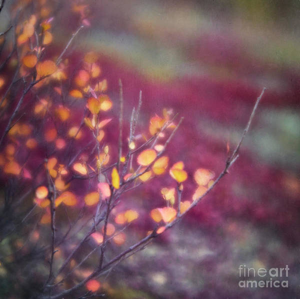 Alder Photograph - Golden Leaves by Priska Wettstein