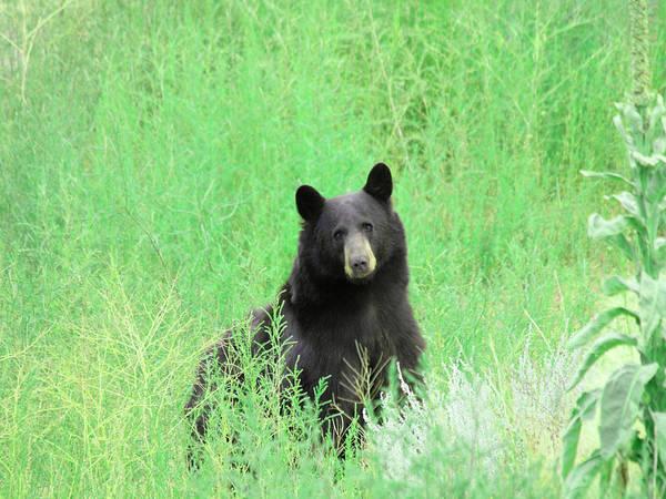 Photograph - Faablackbear102 by Bruce Dunavin