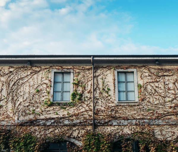 Photograph - Facade With Vines And Blue Sky by Alexandre Rotenberg