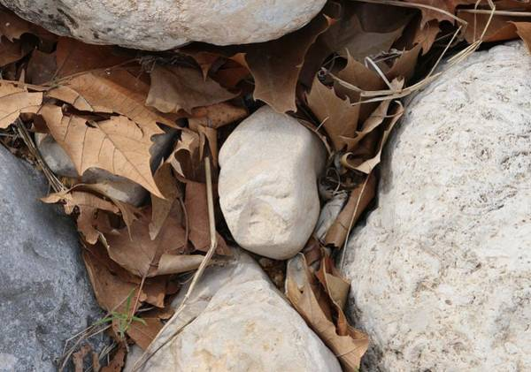 Photograph - Face In Stone by Christy Pooschke