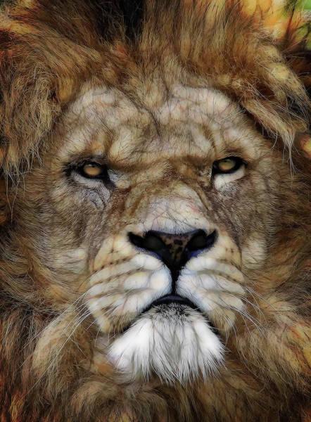 Wall Art - Digital Art - Face Of African Lion by Daniel Hagerman