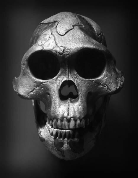 Wall Art - Photograph - Face Of Our Ancestor - Australopithecus Afarensis by Daniel Hagerman