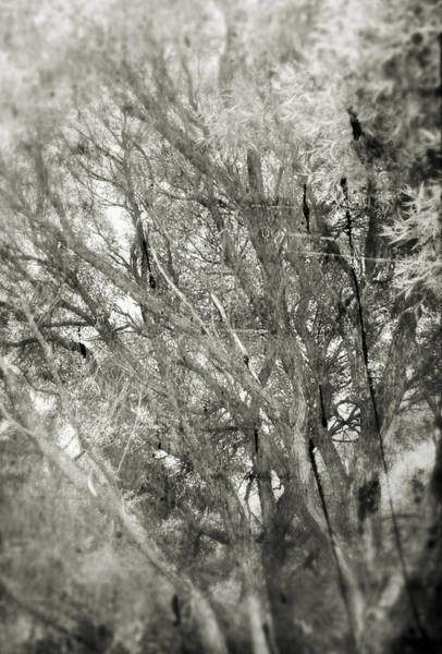 Photograph - Faces Of Time #2428 by Andrey  Godyaykin