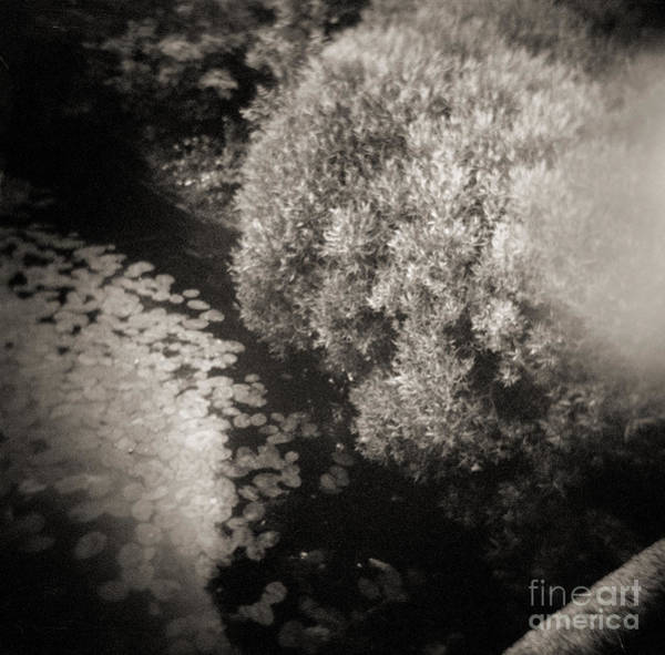 Photograph - Faces Of Time #278 by Andrey  Godyaykin