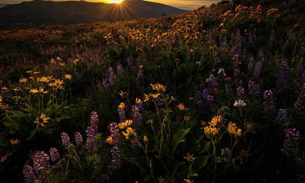 Rowena Photograph - Facing The Day by Mike Lang