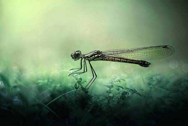 Macro Photograph - Fade Away by Erwin Astro