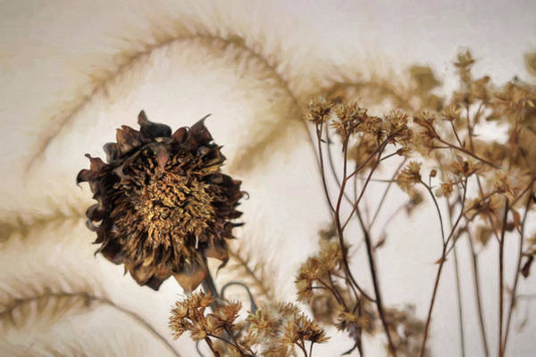 Sunflower Seeds Photograph - Faded Beauty 1 by Lori Deiter