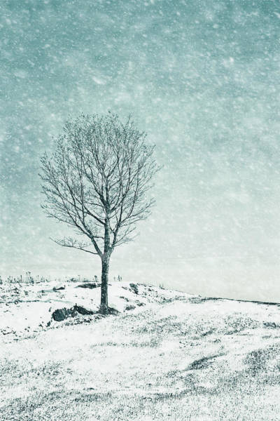 Wintry Photograph - Faded Into Winter by Evelina Kremsdorf