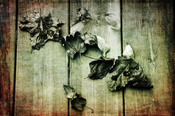 Photograph - Faded Memories by Randi Grace Nilsberg