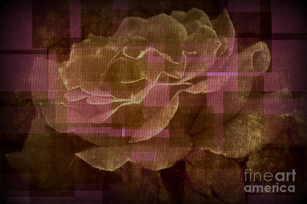 Photograph - Faded Rose by Donna Bentley