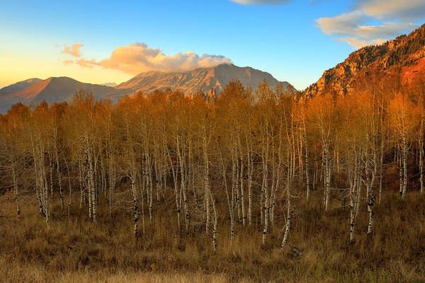 Photograph - Fading Autumn Color On Squaw Peak. by Johnny Adolphson