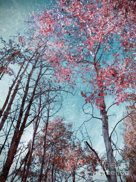 Photograph - Fading Changes by Tara Turner