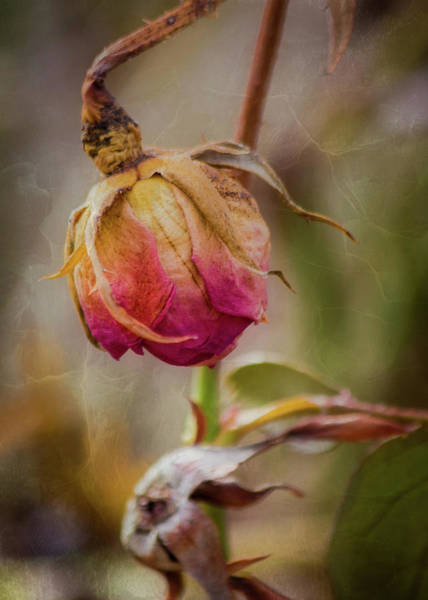 Photograph - Fading Color Of Summer by Allin Sorenson