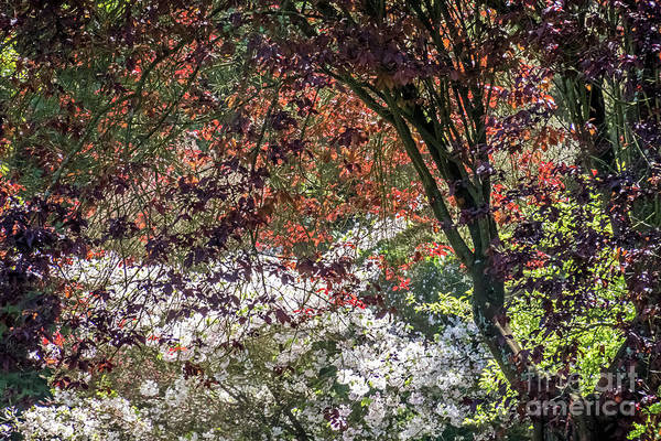 Photograph - Faerie Glen by Kate Brown