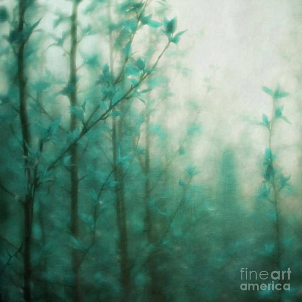 Wall Art - Photograph - In The Deep Forest 2 by Priska Wettstein