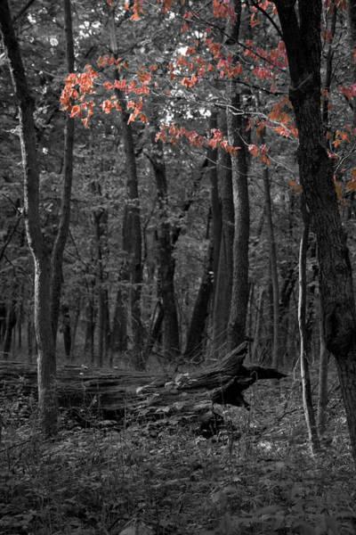 Photograph - Faint Fall by Dylan Punke