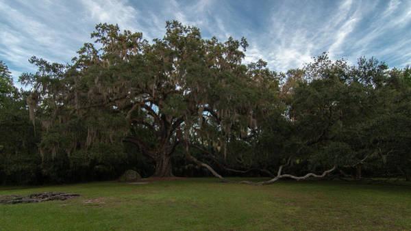 Photograph - Fairchild Oak by Paul Rebmann