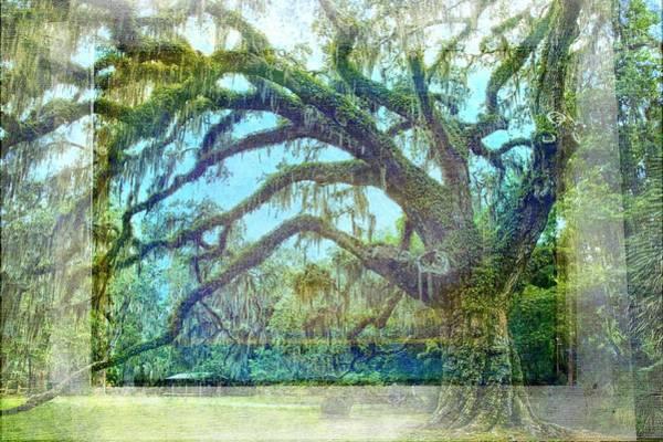 Photograph - Fairchild Oak Textures by Alice Gipson