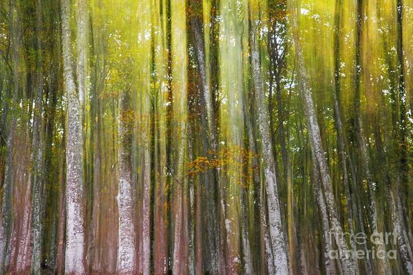 Wall Art - Photograph - Fairy Forest I by Yuri San