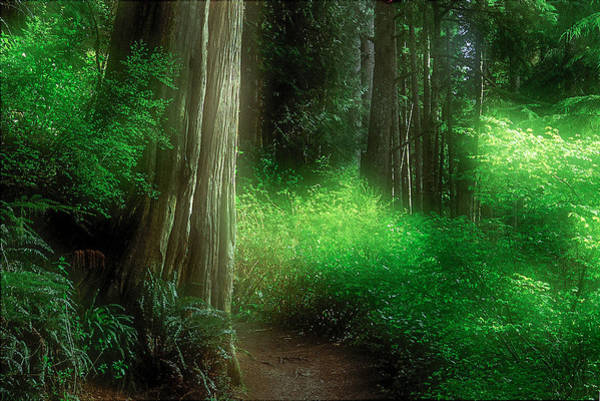 Photograph - Fairy Forest by Kim Lessel