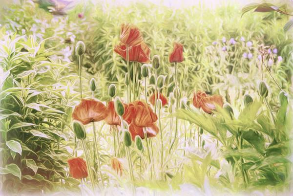 Photograph - Fairy Garden 2 by Marilyn Wilson