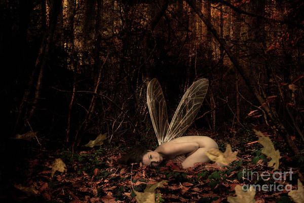 Photograph - Fairy In The Woods by Clayton Bastiani