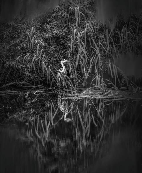 Photograph - Fairy Tale Heron Bw #h2 by Leif Sohlman