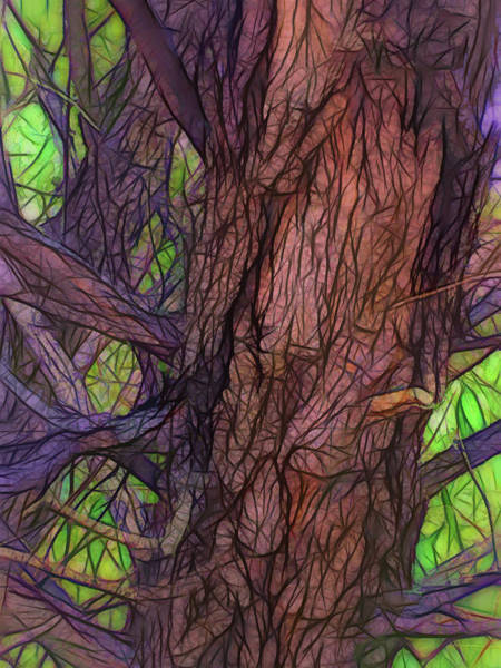 Wall Art - Photograph - Fairy Tale Tree by Lorraine Baum