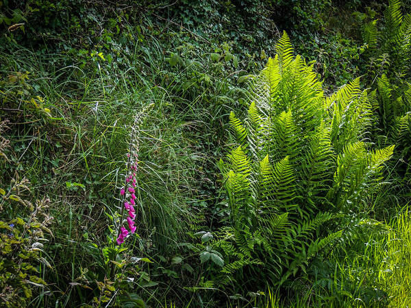 Photograph - Fairy Thimbles And Ferns by James Truett