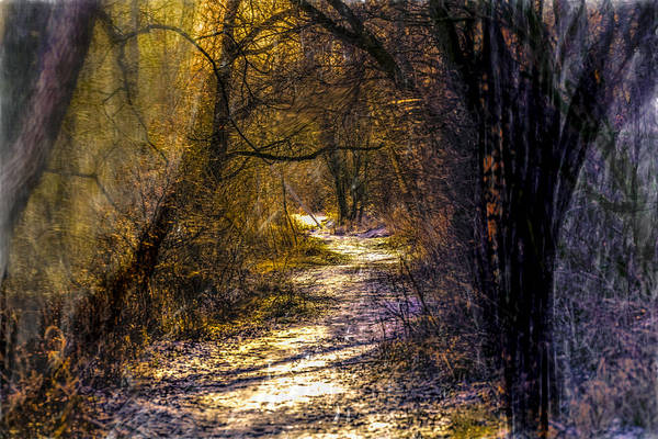 Photograph - Fairy Woods Artistic  by Leif Sohlman